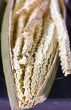 Цветок кокоса Стоковое фото RF