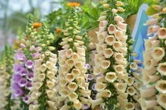 Цветок колокола колокольчика Стоковая Фотография