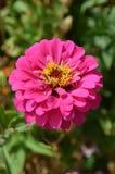 цветок конструкции георгина осени черный сверх Стоковое Фото