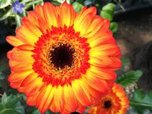 цветок конструкции цвета предпосылки флористический ваш Стоковые Изображения RF