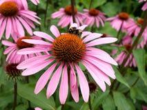 цветок конуса Стоковые Изображения