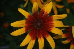 Цветок конуса стоковая фотография