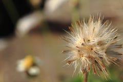 Цветок конца-вверх стоковые фото