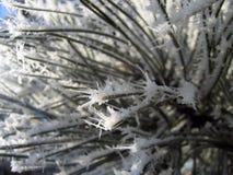 цветок конца 2 вверх по зиме стоковое изображение