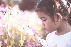 Цветок космоса милой азиатской девушки маленького ребенка пахнуть Стоковое Изображение RF