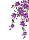 Цветок колокола изолированный на белой предпосылке Стоковая Фотография RF