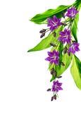 Цветок колокола изолированный на белой предпосылке Стоковые Фотографии RF