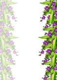 Цветок колокола изолированный на белой предпосылке Стоковые Изображения RF