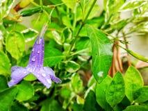 Цветок колокола форменный Стоковая Фотография