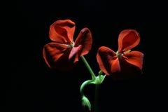 Цветок красивейший Стоковые Изображения RF