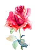 Цветок красного Розы Стоковые Изображения