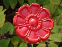 Цветок красного цвета железный стоковые фотографии rf