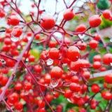 Цветок красного цвета природы стоковые изображения rf