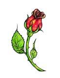 Цветок красной розы изолирован на белой предпосылке Розовое вид спереди чертежа Ручная работа ручками войлок-подсказки Эскиз для  Стоковая Фотография RF