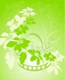 цветок красотки Стоковая Фотография RF