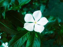 Цветок красоты для того чтобы сделать ваш дом красивый стоковые изображения rf