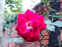 Цветок красоты Стоковое Изображение RF