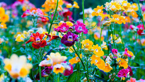 Цветок красочный Стоковое фото RF