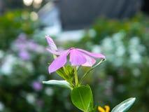 Цветок кресс-салата стоковые фотографии rf