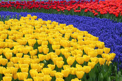 цветок кровати пестротканый Стоковая Фотография RF