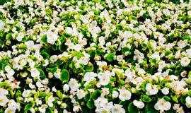 цветок кровати стоковое изображение rf