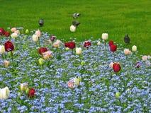 цветок кровати Стоковые Фото