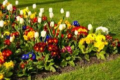 цветок кровати Стоковые Изображения