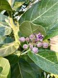 Цветок кроны Стоковые Фото