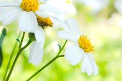 Цветок крупного плана белый запачкает естественную предпосылку стоковое изображение rf
