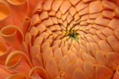 цветок крупного плана Стоковые Фотографии RF
