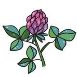 Цветок клевера также вектор иллюстрации притяжки corel Стоковые Фотографии RF