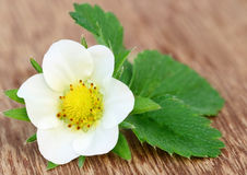 Цветок клубники Стоковое Фото