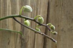 цветок к Стоковое фото RF