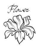 Цветок лета вектора декоративный Стоковые Изображения