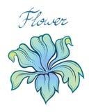 Цветок лета цвета вектора декоративный Стоковое Изображение