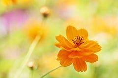 Цветок лета Стоковое фото RF
