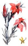 Цветок лилии акварели Стоковые Фотографии RF