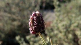 Цветок Лонг-Бич Вашингтона Costal Стоковое Изображение
