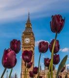 Цветок Лондон большого Бен Стоковые Фото