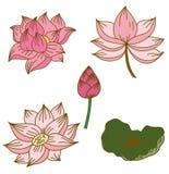 Цветок лотоса круга нарисованный рукой Стоковые Изображения