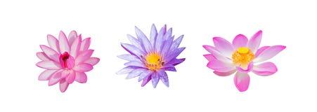 Цветок лотоса собрания изолированный на белизне Стоковая Фотография RF