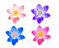 Цветок лотоса собрания красочный для украшает изолированный Стоковые Фото