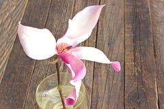 Цветок магнолии в стеклянной вазе на деревянной предпосылке Стоковые Фото