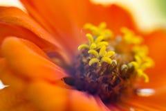 Цветок макроса в солнечном свете стоковое фото rf