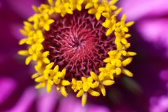 Цветок макроса в солнечном свете стоковая фотография rf