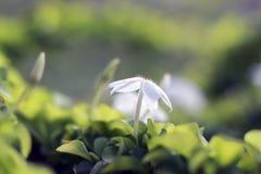 Цветок макроса стоковые изображения
