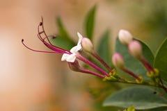 цветок малый Стоковые Изображения RF