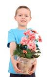 цветок мальчика potted Стоковые Изображения RF