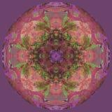 Цветок мандалы луны, простая фиолетовая предпосылка, центральное изображение в бежевом, зеленый, пурпурный, коралл иллюстрация штока