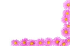 цветок маргаритки граници Стоковая Фотография